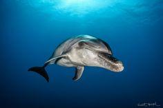 Photos de mammifères marins