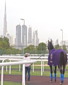 Arrogate checking out Dubai in preparation for the World Cup 3/25/17