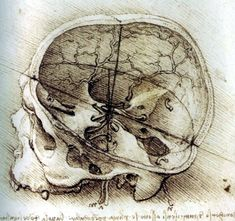 Free from section Medical and Anatomy Related Images: 'anatomy Da Vinci skull' #anatomy #DaVinci #skull #medical