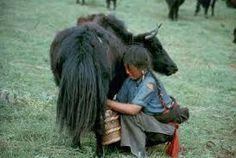 Image result for tibetan nomads