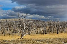 Dead Tree Field by Christy Patino Photography