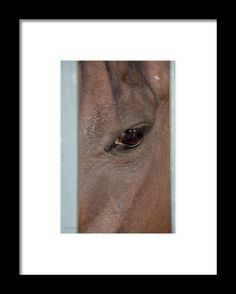Framed Print featuring the photograph Manny by Pamela Williams
