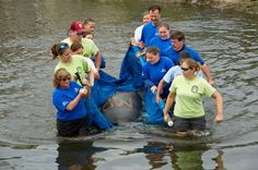 SeaWorld Orlando returns two manatees, rescued due to cold stress, back to their natural habitat earlier this spring.