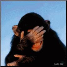 Laughing Chimp GIF - Laughing Chimp Giggle - Discover & Share GIFs