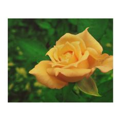 Yellow Rose Photo Wood Canvas,  Multiple sizes are available. Great for home or office decor. Also a great gift idea for holidays, birthdays, anniversary, and house warning.