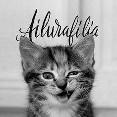 Ailurafilia, amor y fascinación por los gatos.  #cats #instacats #caligrafia #calligraphy #letras #letters #ailurafilia #lovecats #lovecatsforever #gatos #gatosdeinstagram #amanoalzada