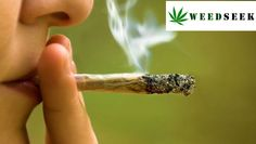 Consume Cannabis legally in Spain?