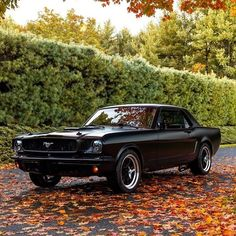 Ford Mustang 1960, Ford Mustang Fastback, Mustang Cars, Ford Mustangs, Custom Muscle Cars, Sexy Cars, American Muscle Cars, Amazing Cars, Fast Cars