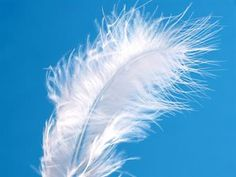 Feathers may be the ultimate angelic sign, come in all different sizes and colors, they're amazing signs because they're directly connected with the thought, prayer, or question that you had in mind. Rarely will you find one left by the angels without knowing what it means. Either you'll come across it while thinking about something or you'll immediately sense the association upon finding it. The angels will bring you feathers and other signs in a way tailor-made to your own level of faith.