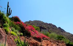 Sheer natural beauty! Camelback Mountain, Scottsdale, AZ