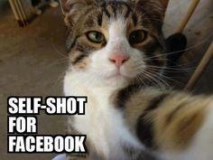 Kitty self-shot