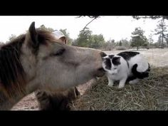 VIDEO:  'Pony Grooms a Cat' - posted by worthashotfarm on YouTube