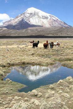 Nevado Sajama, Sajama National Park, Bolivia by Yilud. (The mountain is a volcano, the animals are alpacas.)