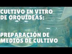 Cultivo In vitro de Orquídeas #5: Preparación de Medios de Cultivo - YouTube