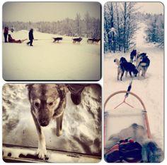 #Huskies #Lapland 2012