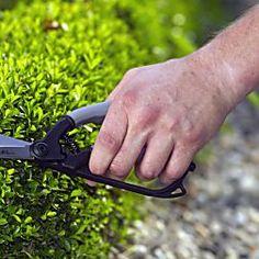 Schöne Einfassungen und  Formgehölze aus Buchsbaum sind kein Hexenwerk. Hier finden Sie die besten Praxistipps für die Buchsbaum-Pflege.