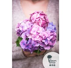 No matter what you want, #hydrangeas are always the answer #Colombia #flowers