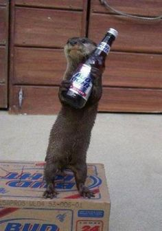 Drunk Animals | PiC LaC