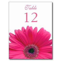Pink Gerbera Daisy Table Number Card Postcards
