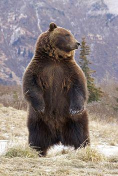 <Bear