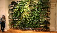 Indoor living wall diy living wall indoors lounge toward escalator indoor living wall planter indoor living . Plant Wall Diy, Indoor Plant Wall, Indoor Plants, Pot Plants, Vertical Garden Wall, Vertical Farming, Vertical Gardens, Living Wall Planter, Indoor Vegetable Gardening
