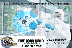 Five Boro Mold Specialist Offers the Best Mold Abatement Services In New York & Staten Island