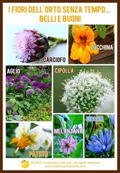 I fiori dell'orto senza tempo... belli e buoni!