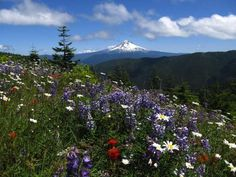 Oregon's Paradise Park Loop is a hike that lives up to its name