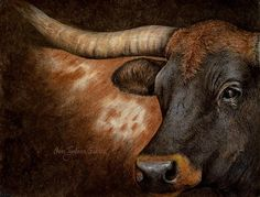 Charcoal and pastel drawing. Fine Art Drawing, Pastel Drawing, Art Drawings, Animal Photography, Fine Art Photography, Longhorns, Western Art, Bison, Light And Shadow