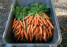 19 Ways to Make Fresh Produce Last Longer
