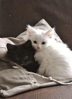 En... Blanco y Negro ¡Adorables gatitos! [ So Adorable Black and White Cats ]