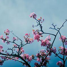 5x5 Fine art photography pink print  Candy by mylittlepixels, $13.00    Teampinterest