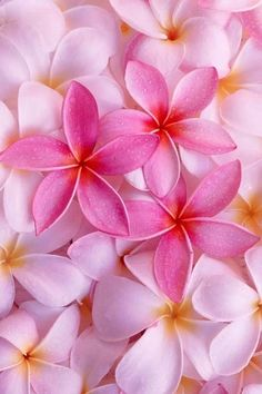 Plumeria!~ Id LOVE to grow these JUST so I can make lei necklaces for myself...
