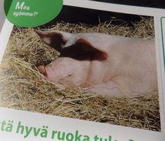 Mistä hyvä ruoka tulee - Luomulaakso Ipanapostissa Animals, Animales, Animaux, Animal, Animais