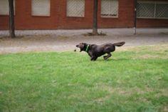 ★★★★✩ Ballwurfmaschine für Hunde im Test ✔ iFetch ✔ GoDogGo G4 ✔ Hyperfetch ✔ Die besten Geräte ✔ Viele Tipps & Tricks ✔ ☢ Wichtige Warnungen ☢ Hier zu den Angeboten ➪