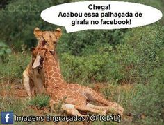 . Animals, Giraffe Illustration, Humorous Pictures, Animales, Animaux, Animal, Animais