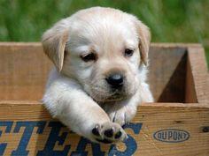 cachorro en caja de madera
