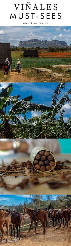An den Besuch des wunderschönen Viñales-Tals werdet ihr euch noch lang zurückerinnern und ich empfehle euch Viñales mit in eure Reiseroute aufzunehmen. Alles über unsere Unterkunft, einen Ritt durch die Tabakregion, das kleine Örtchen an sich und meine persönlichen Highlights in Valle de Viñales erfahrt ihr in diesem Beitrag. Viel Spaß beim Lesen, Entdecken und Reise-Inspirationen sammeln!