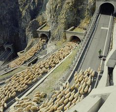 flocks Italy  goes a flock of sheep underpass