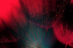 red by Bibula  on 500px