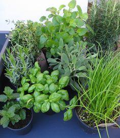 Planting your own Kitchen Window Herb Garden Columbia Road Flower Market, Indoor Planters, Herb Garden, Herbs, Flowers, Plants, Indoor Window Boxes, Herbs Garden, Herb