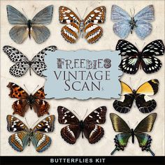 Freebies Butterflies Kit