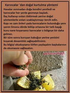 Karıncalardan kurtulma yöntemi House Cleaning Tips, Cleaning Hacks, Animal Decor, Healthy Beauty, Kitchen Hacks, Clean House, Good To Know, Herbalism, Detox