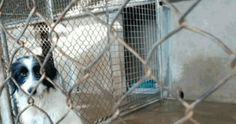 Prohibit the sale of dogs while protective are full of abandoned dogs