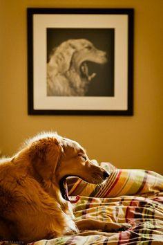 cachorro_bocejando