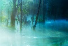 Marsh in the Morning Mist by Isogawyi on Flickr.