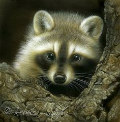 Watching You - Raccoon, 8in x 8in, watercolor on board, ©Rebecca Latham
