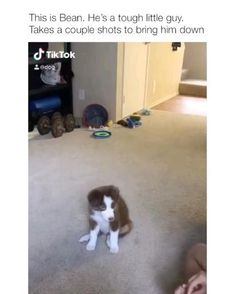 Cute Funny Dogs, Funny Dog Memes, Funny Animal Memes, Funny Animal Videos, Cute Funny Animals, Funny Animal Pictures, Videos Funny, Cute Dogs And Puppies, Baby Dogs