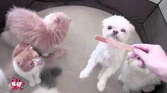 Suloiset Koirat ja Kissat- Parhaat Ystävät