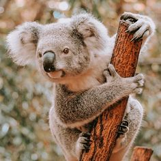 Visit the Gold Coast Rainbow Beach, Australia Tours, Most Beautiful Beaches, Byron Bay, Gold Coast, Sailing, Van, Explore, Animals